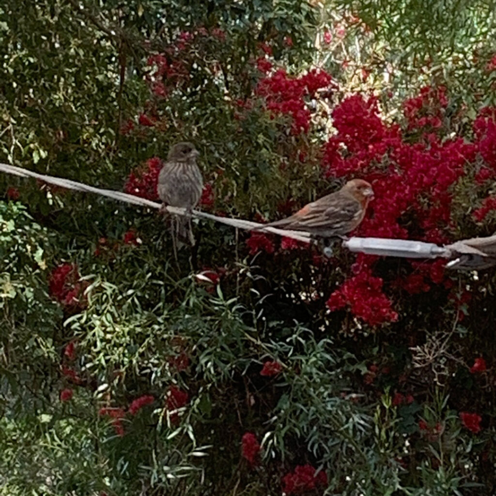 two finches sitting on a rope