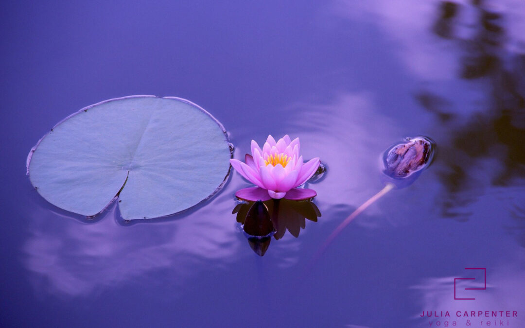 lotus blossom and lilypad on water